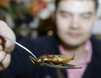 лечебное насекомое