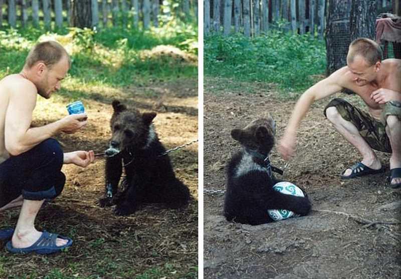 мужчина балуется с медвежонком