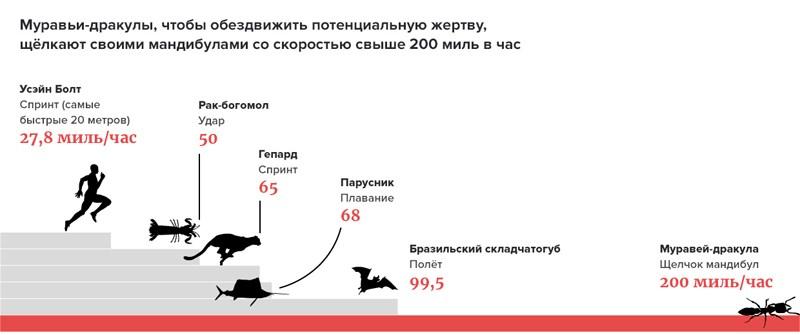 Самые бегающие и летающие животные