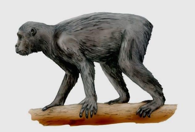 древняя обезьяна