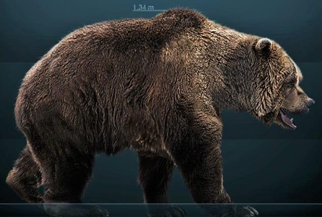 древний медведь