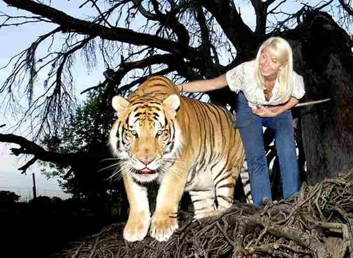 тигр и женщина
