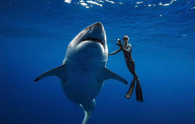 девушка прикоснулась к акуле