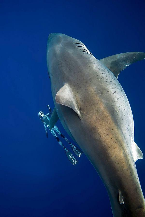 девушка держится возле белой акулы