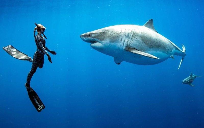 акула напротив девушки