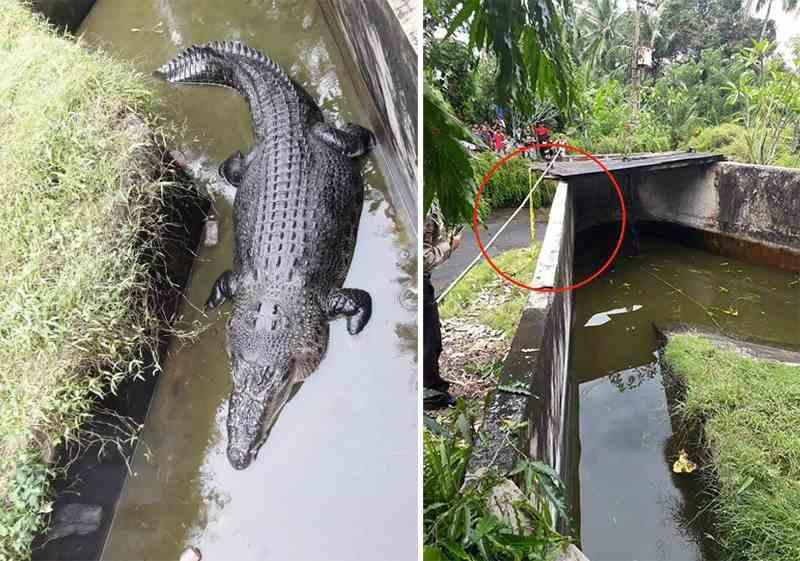 крокодил съел женщину