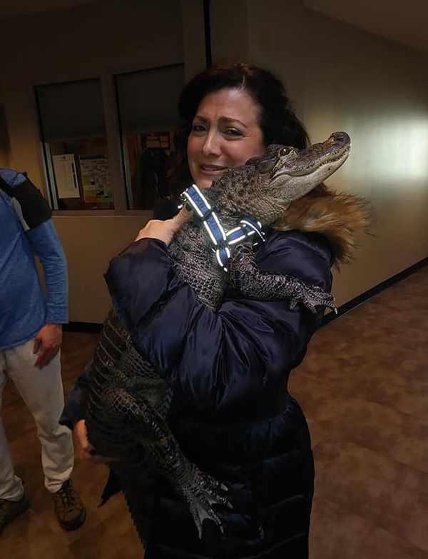 женщина обнимается с аллигатором