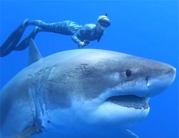 женщина с большой белой акулой
