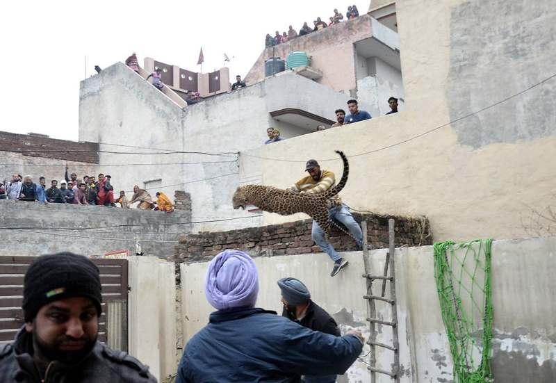 Мужчина столкнул леопарда