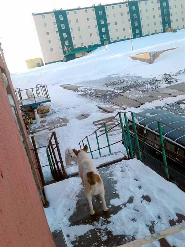 собак и белый медведь