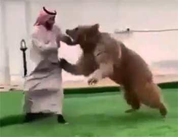на принца напал медведь