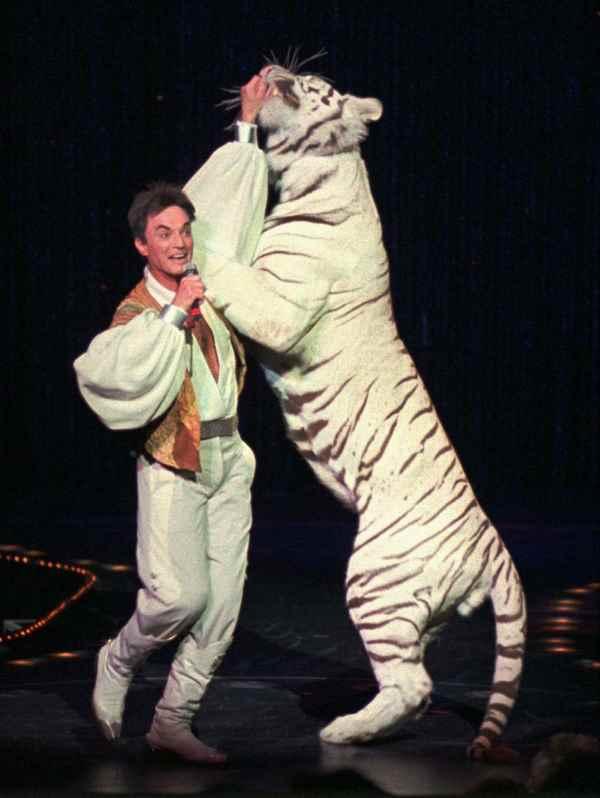 Рой с тигром во время выступления