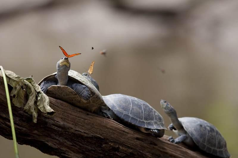 бабочки и черепахи