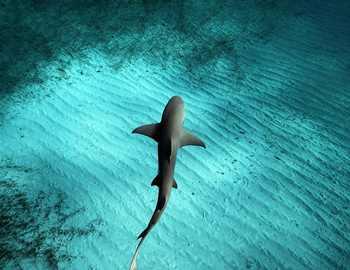 нападение акулы на Гавайях