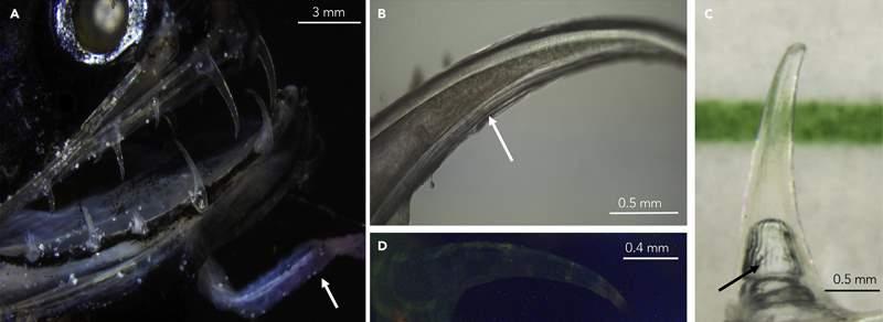 нанокристалы на зубах рыбы