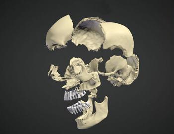 кости человеческого черепа