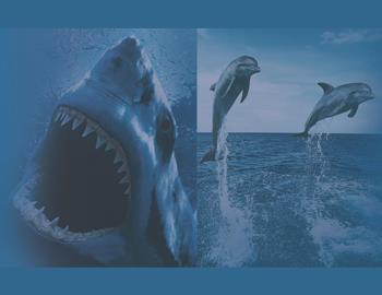 дельфины против акул