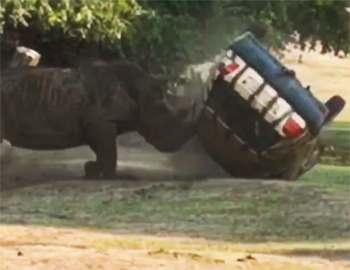 носорог пинает автомобиль