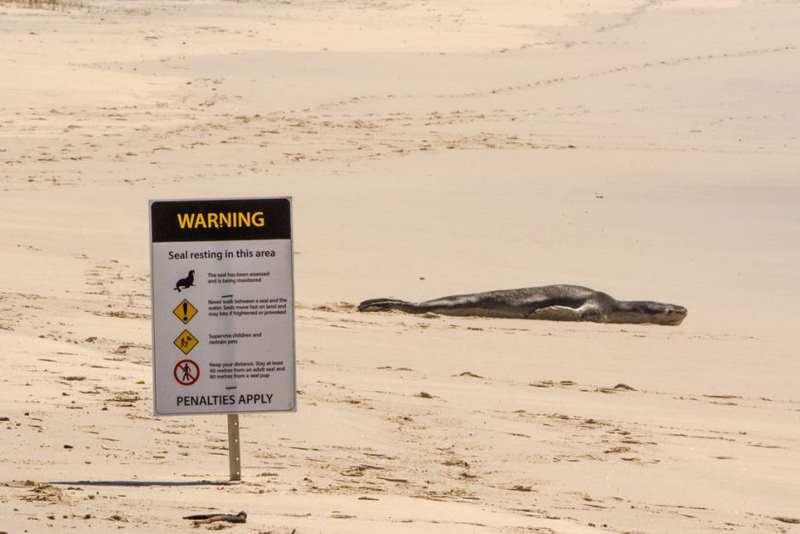 знаки о морских леопардах