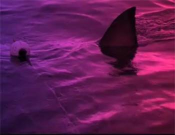акула откусила женщине обе руки