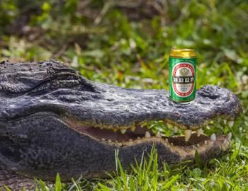 аллигатор с банкой пива