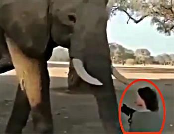 женщина на коленях перед слоном