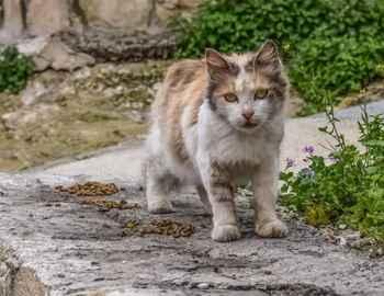 бешеный котенок напал на людей