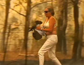 женщина спасает коалу