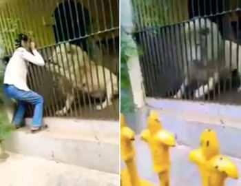 лев схватил смотрителя зоопарка