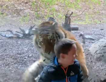 тигр атакует мальчика