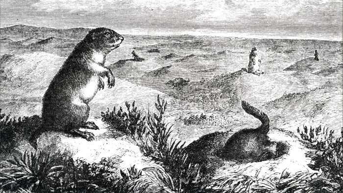 картина с луговыми собачками