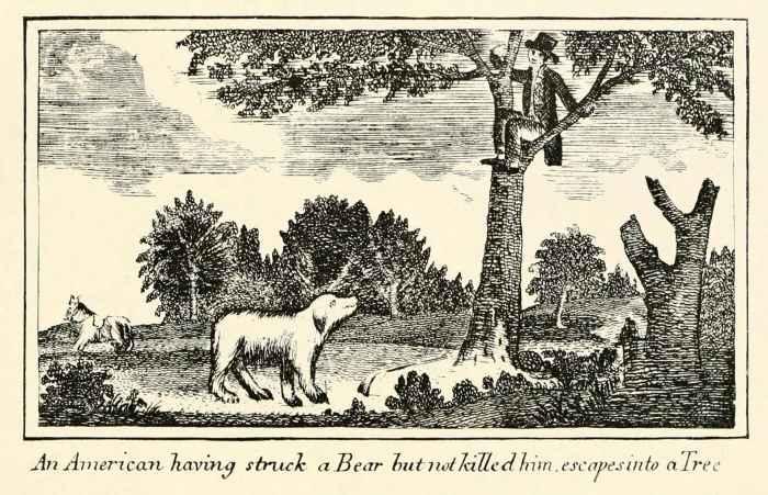 мужчина спасается от медведя на дереве