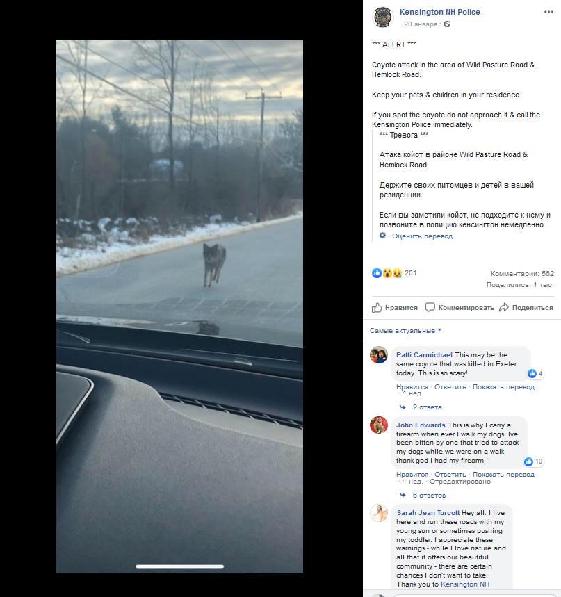 сообщение полиции о койоте