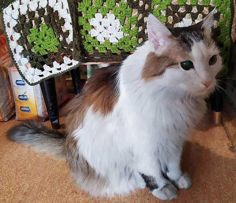 кот спасет женщину от пожара в квартире