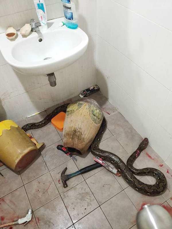 змея укусила из унитаза