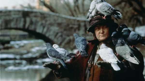 кормчая голубей