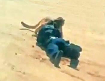 пума напала на полицейского