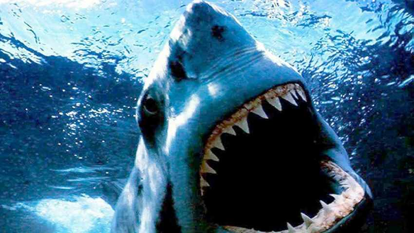 фильм про акул