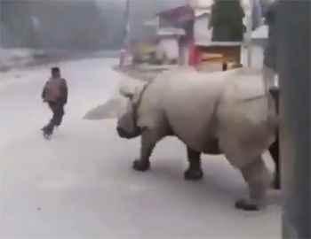 носорог прогнал нарушителя карантина