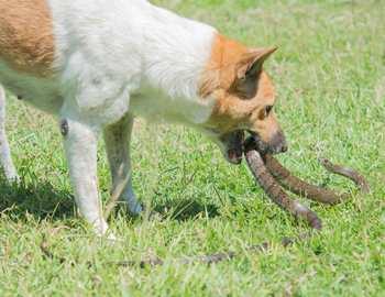 собака напала на змею