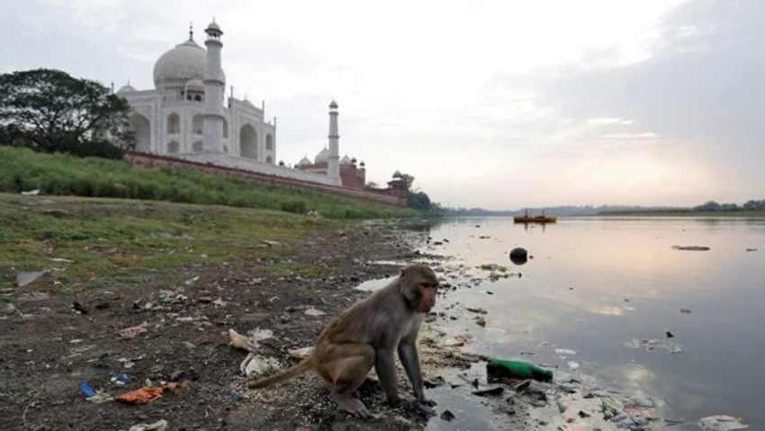 обезьяна на загрязненном берегу реки