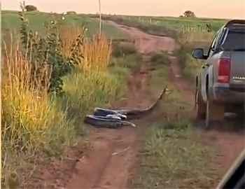 анаконда нападает на авто