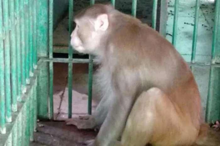 обезьяна - алкоголик