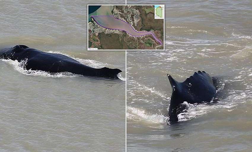 кит заплыл к крокодилам
