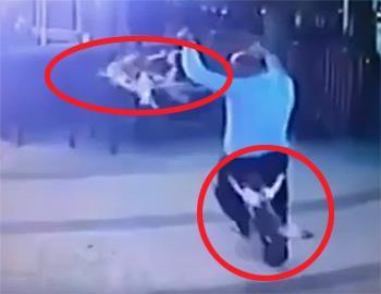 кошка напала на собаку и его хозяина