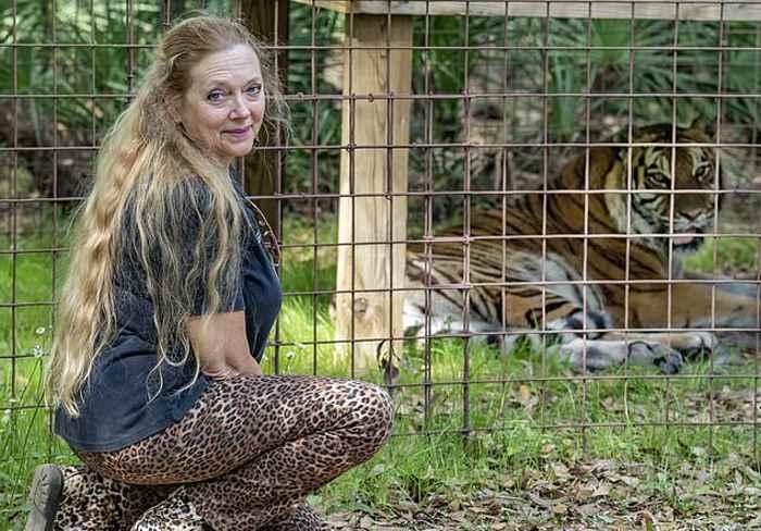 в заповеднике тигр напал на волонтера