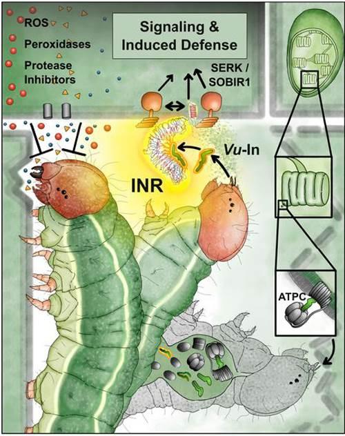 исследование гусениц и растений