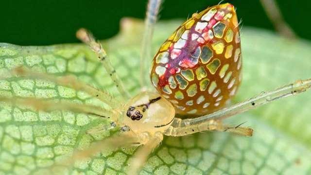 диско-шар паук