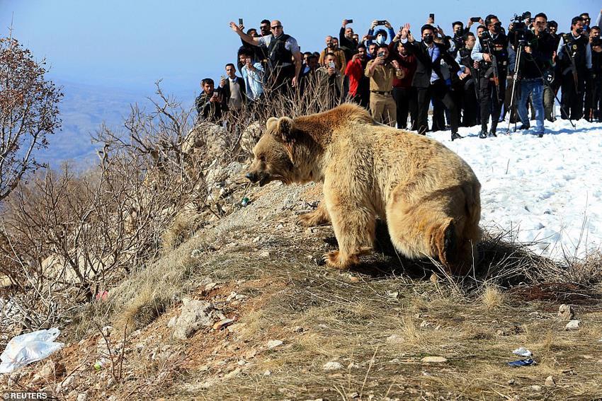 медведь на свободе в Ираке