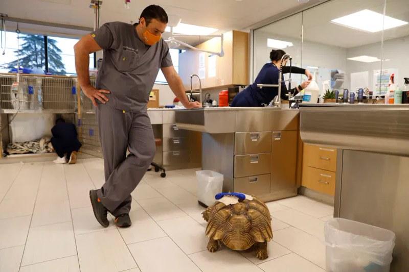 ветеринар смотри на черепаху